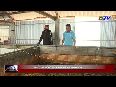 Hiệu quả từ mô hình nuôi lươn không bùn