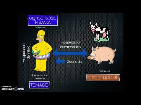 Protozoan paraziták embereken tünetek