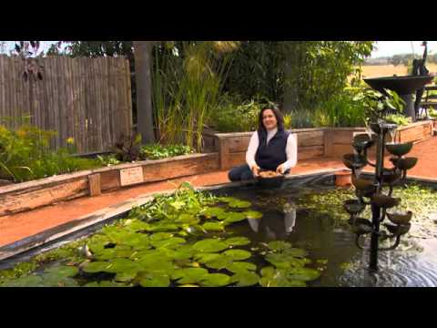 Dividing and Potting Hardy Water Lilies and Spring Tips for Ponds and Aquaponics