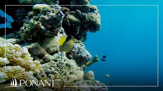 Ponant Cruises: The top 5 most beautiful dives
