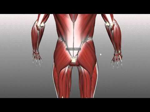 Jak budować mięśnie za 11 lat