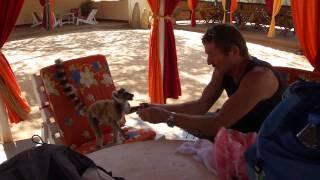 preview picture of video 'Berenty 2010 - Notre copain lémurien - Part.2 - Madagascar'