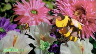 Sesame Street: Baby Bear and Bees