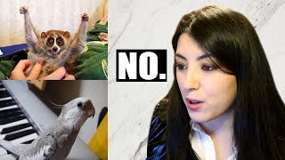 PET YouTuber Reacts To Viral Animal Videos | EMZOTIC