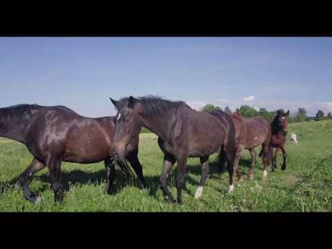 Cherchons palefrenier/gardien chevaux