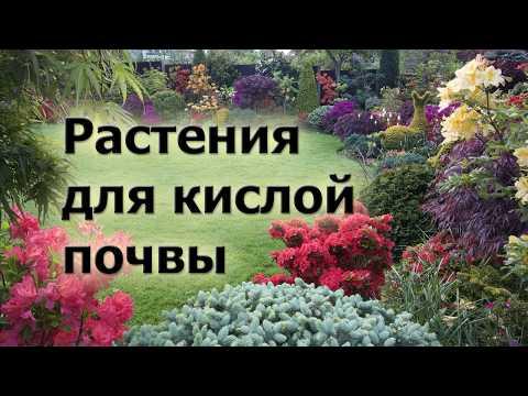 Растения для кислой почвы. Что хорошо растет и красиво цветет на кислых грунтах.