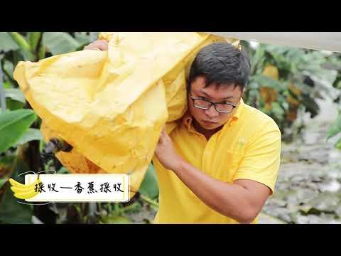 臺灣香蕉特色(中文版)