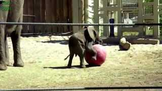 Best Funny Elephant Videos Compilation New 2014