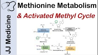 Methionine Metabolism And Activated Methyl Cycle | Pathway And Purpose