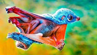 10 იშვიათი ცხოველი უცნაური ადაპტაციით