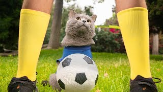 World Cup Cats - Video Youtube