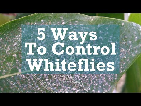 , title : '5 Ways to Control Whiteflies