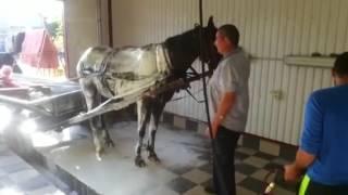 Как моют лошадей )))