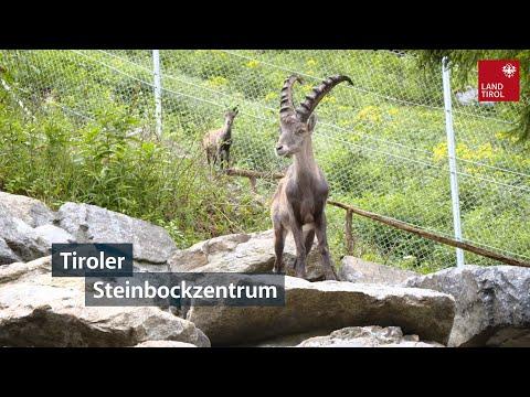 Tiroler Steinbockzentrum