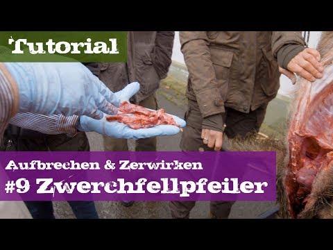 Die Würmer des Meerfisches