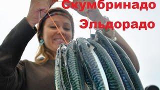 Как ловят скумбрию в черном море