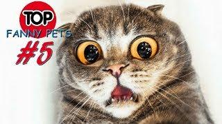 ПРИКОЛЫ 2019, ТОП СМЕШНЫХ ВИДЕО С КОТАМИ/Смешные животные/Смешные кошки/TOP FUNNY PETS #5