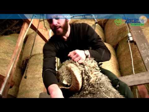 Voir la vidéo : Ring Ovins et Caprins du 02 mars 2017, partie 4