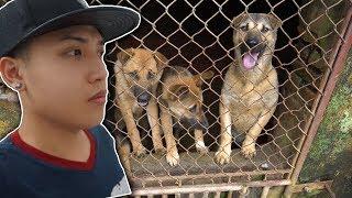 NTN - Cứu Sống Những Chú Chó Khỏi Lò Mổ (Saving the dogs from dieing)