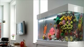 Would You Pay $100,000 For An Aquarium? - WSJ