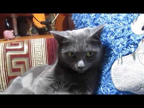 Кошка после кесарева сечения  кормит котят .