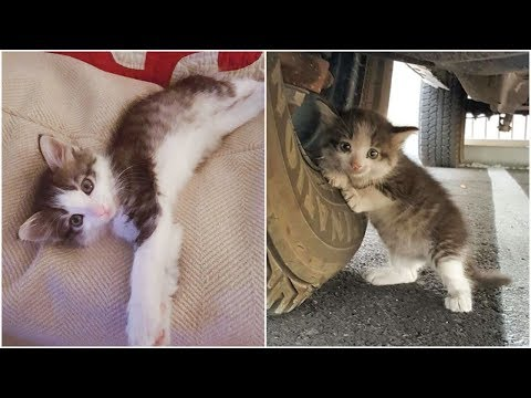 A Man Rescued Little Kitten Behind The Truck Will Before The Accident Done!