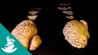 The Brain, the Last Enigma