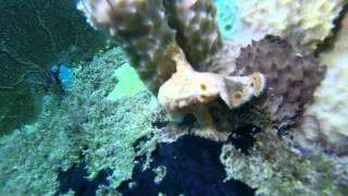 preview picture of video 'Plongée ValAventure à Terres de Bas avec Fred'