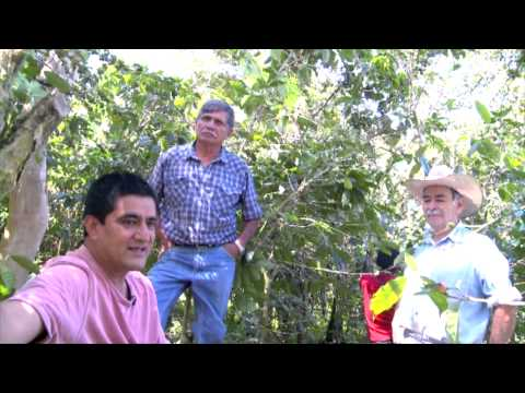 Mexican Coffee Company - From Bean to Cup - Documentary
