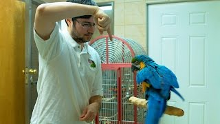 Rachel Blue and Gold Macaw Learns Turn Around Trick