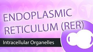 Intracellular Organelles- Rough Endoplasmic Reticulum (RER)