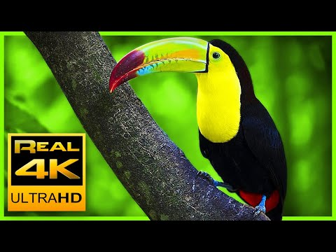 Breathtaking Colors of Nature in 4K III  Beautiful Nature – Sleep Relax Music 4K UHD TV Screensaver