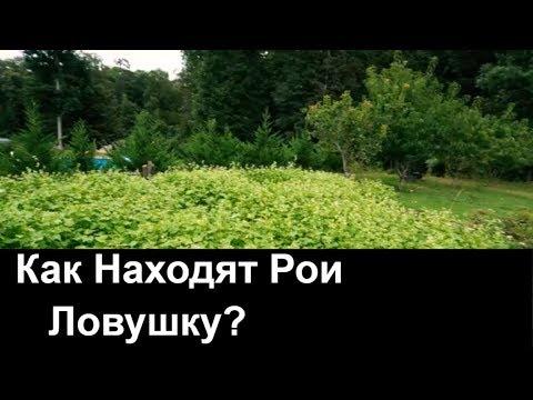 №73 Как Находят Рои Ловушку  Пасека.Пчеловодство.