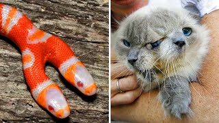 10 Bizarre Two Headed Animals That Actually Exist!