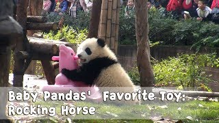 Baby Pandas' Favorite Toy: Rocking Horse | iPanda