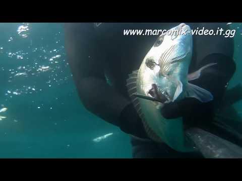 Come tenere una picca nellestate su pesca