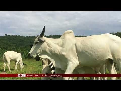 BBC Hausa - Rayuwar fulani makiyaya a kudancin Najeriya