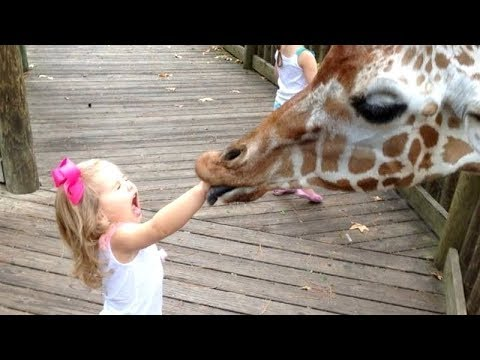 Funny Kids vs Zoo Animals