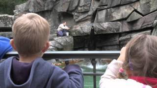 Zoo Basel: Wenn Löwen Bellen Und Baden