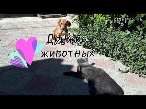 Дружба домашних питомцев)))щенок и кошечка)))играют вместе