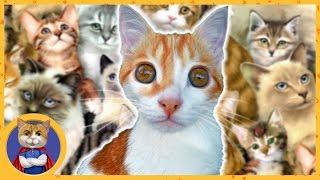 Рыжик в приюте для кошек Муркоша. 500 спасенных кошек!