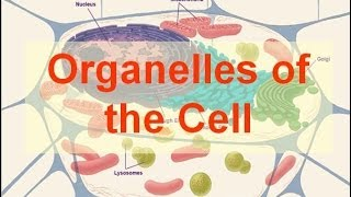 Organelles of the Cell (updated)