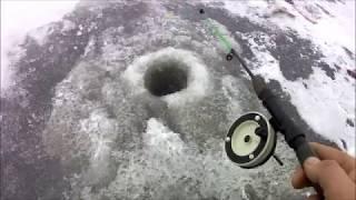 Первый лёд. Очень клёвый клёв.
