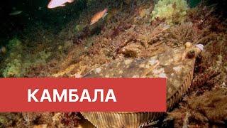 Рыбалка в приморском крае летом 2020