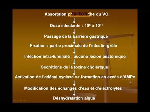 Sistemul digestiv platyhelminthes complet sau incomplet