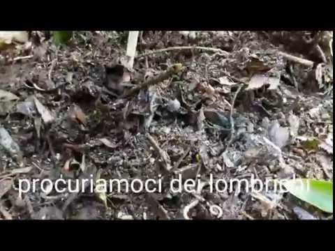 Leliminazione di parassiti da un girasole di zucca di organismo semina