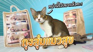 หน่านิ้รีวิว: ถุงสุ่มแมวแสนสุข!? หน่านิ้อยากสุ่มจังค่ะ!【 Cat Happy bag 】