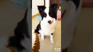 Милые собаки  Смешные собаки 2018