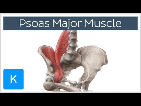 Comme les muscles du tendon travaillent