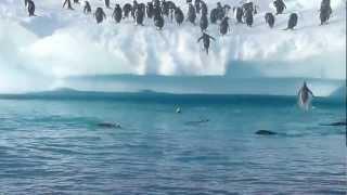 Смотреть онлайн Пингвины пытаются допрыгнуть до берега